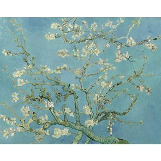 Almond Blossom - Book / Magazines / Flyers