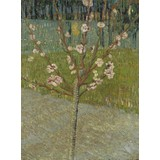 Peach Tree in Blossom - Multimedia / Film / Video