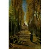 Avenue of Poplars in Autumn - Book / Magazine / Flyer
