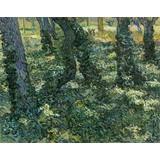 Undergrowth - Multimedia / Film / Video