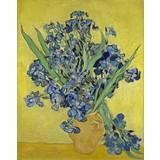 Irises - Book / Magazines / Flyer