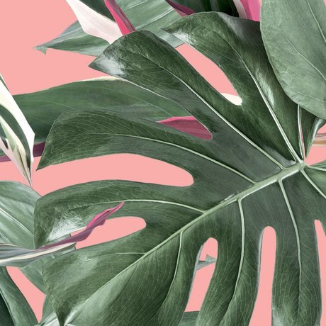 KEK Amsterdam Wallpaper Botanical leaves pink non-woven wallpaper 97,4x280cm (2 sheets)
