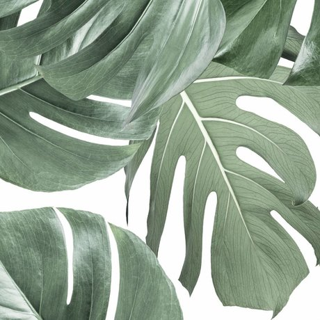 KEK Amsterdam Wallpaper Monstera white non-woven wallpaper 97,4x280cm (2 sheets)