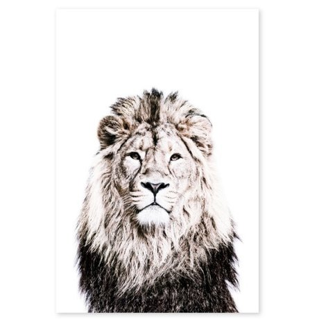 Groovy Magnets Children's magnet sticker lion self-adhesive vinyl with iron particles 60x90cm