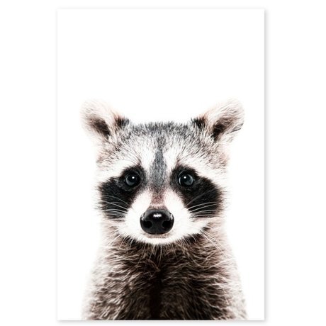 Groovy Magnets Children's magnet sticker raccoon self-adhesive vinyl with iron particles 60x90cm