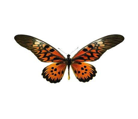 KEK Amsterdam Wall Sticker Butterfly Butterfly 951 brown orange 16x10cm