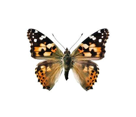 KEK Amsterdam Wall Sticker Butterfly Butterfly 953 brown white 17x12cm