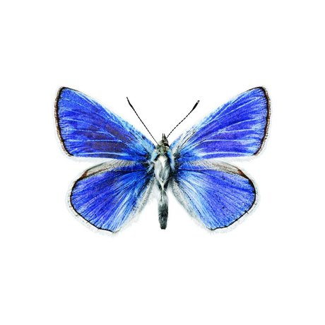 KEK Amsterdam Wall Sticker Butterfly Butterfly 959 blue 17x11cm