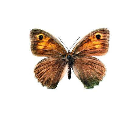 KEK Amsterdam Wall Sticker Butterfly Butterfly 952 brown 17x12cm