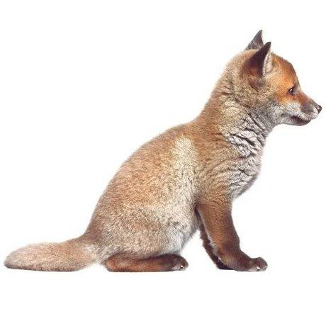 KEK Amsterdam Muursticker Baby Fox bruin 34x26cm