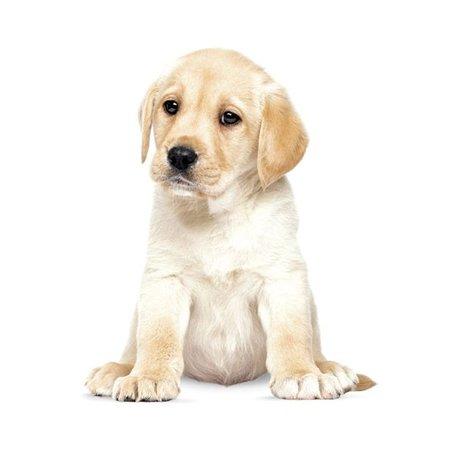 KEK Amsterdam Wall Sticker Labrador puppy 24x28cm