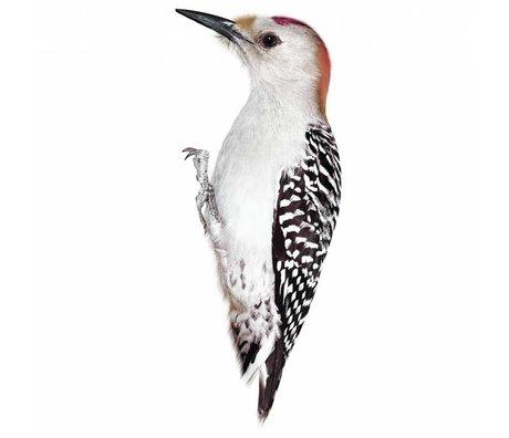 KEK Amsterdam Muursticker Woodpecker 8x20cm, Vogel collectie
