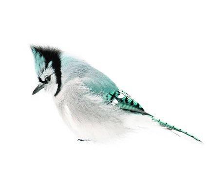 KEK Amsterdam Muursticker Blue Jay, blauw, 15x8cm, Vogel collectie