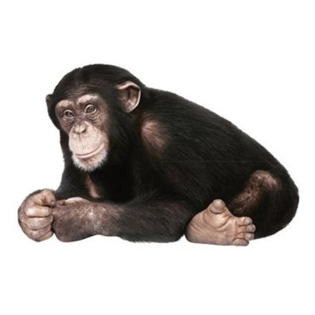 KEK Amsterdam Muursticker aap bruin/zwart vinyl 29x44cm, Safari Friends Chimpanzee
