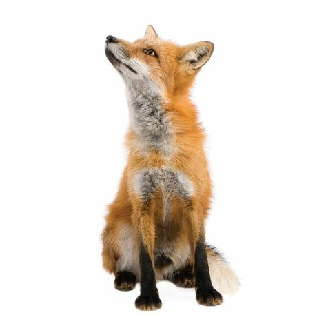 KEK Amsterdam Wall Sticker forest friends fox