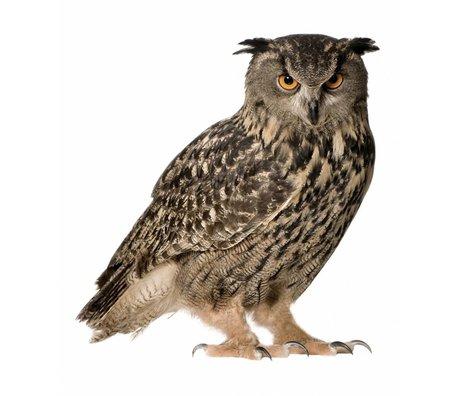 KEK Amsterdam Muursticker uil forestfriend owl