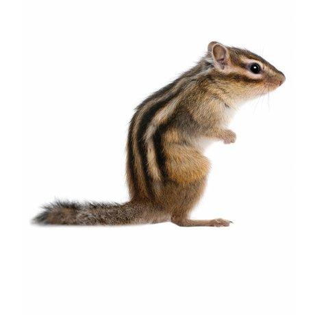 KEK Amsterdam Muursticker eekhoorn forestfriend squirrel