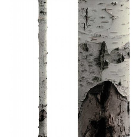 "KEK Amsterdam Wall Sticker trunk 'Home Tree 3 ""white / brown vinyl 16x260cm"