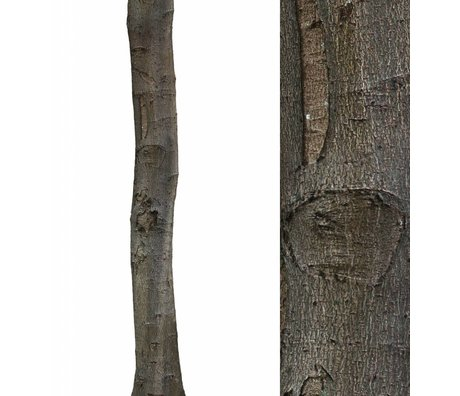 KEK Amsterdam Wall Sticker trunk 'Home Tree 1' brown / green vinyl 28x260cm
