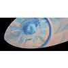 Zap ZAP - ACE 52  - Ocean circle