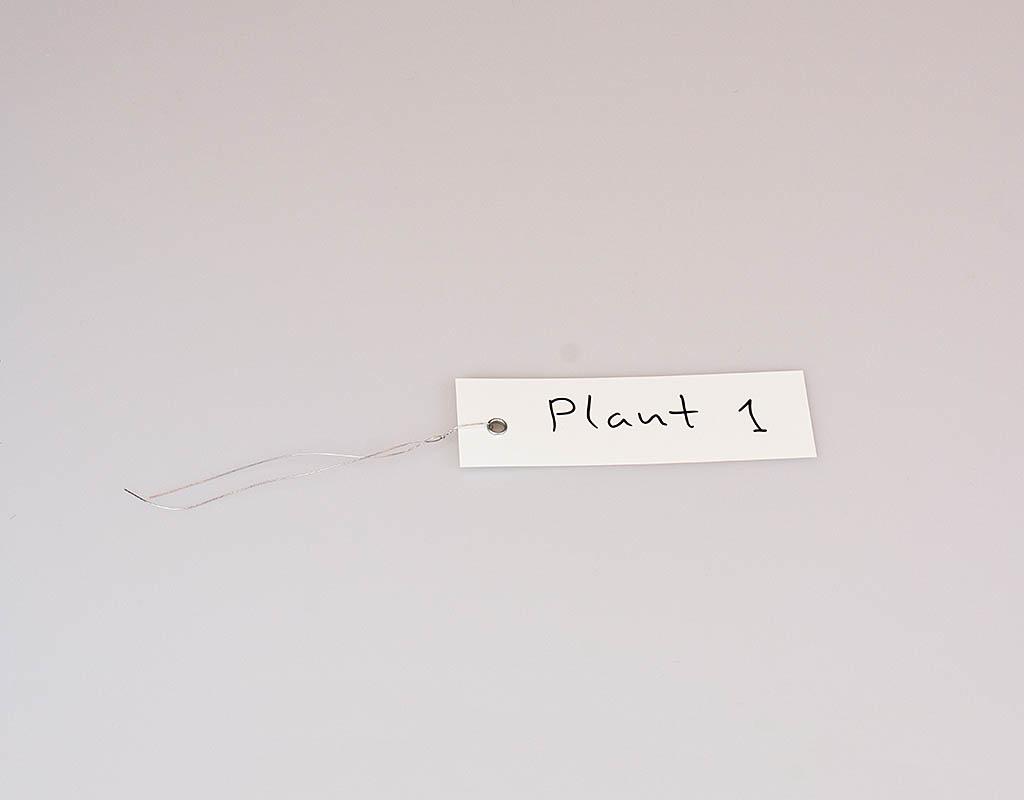Planten label (20st)