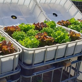 IBC Hochbeet natur mit Sommersalat-Mix 250 l - 93 Höhe auf Stahl mit Podest
