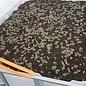 IBC Frühbeet-Kasten mit Gourmet-Basilikum 250 Liter transparent auf verzinkter Stahl-PE-Palette 55 cm erhöht #2HB-MPE250&55-Gourmet-Basilikum-REGEN-USER