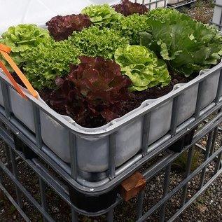 HESS DESIGN IBC Hochbeet für Salat 250 Liter transparent auf Kunststoff-Palette 55 cm erhöht #2HB-VP250&55-Salat-REGEN-USER