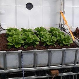HESS DESIGN IBC Hochbeet natur mit Römer-Salat 250 l - 93 Höhe auf Stahl mit Podest