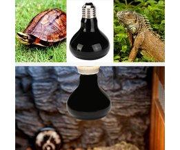 Infrarood-Lamp voor Terrarium (25W, 50W, 75W of 100W)