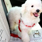Hondenriem voor Auto