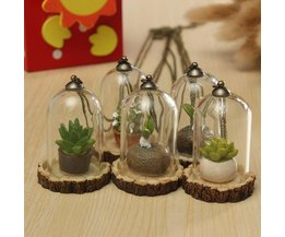 Hangende Plant in Plexiglas met Ketting