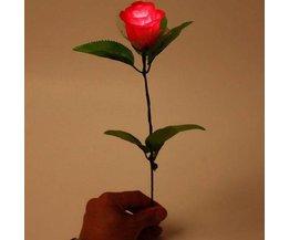 Lichtgevende Roos