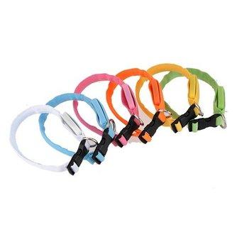 LED Halsband Hond