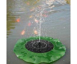 Waterlelie Fontein Voor De Vijver