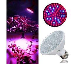 E27 LED Kweeklamp 3.8W