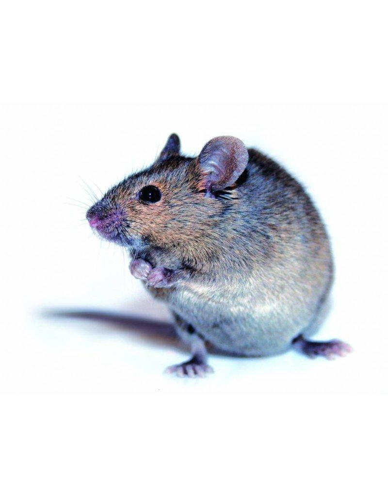 BSi Elektrische muizen- en rattenval