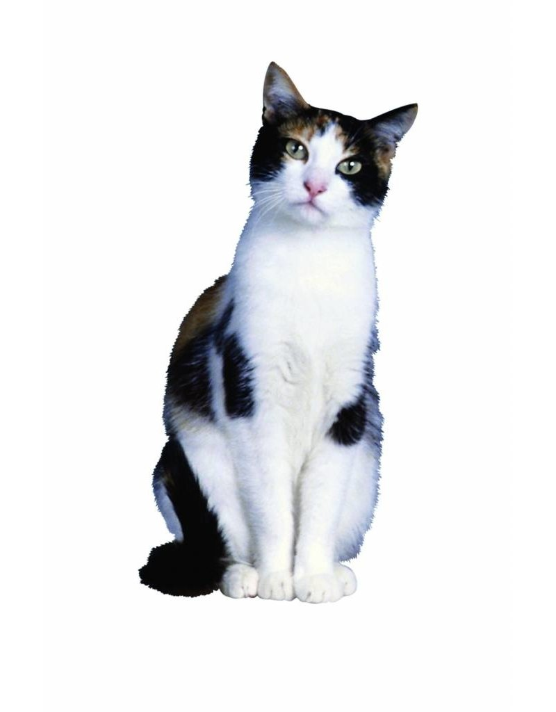 BSi Stop Spray 800 ml Katten- en hondenafweer