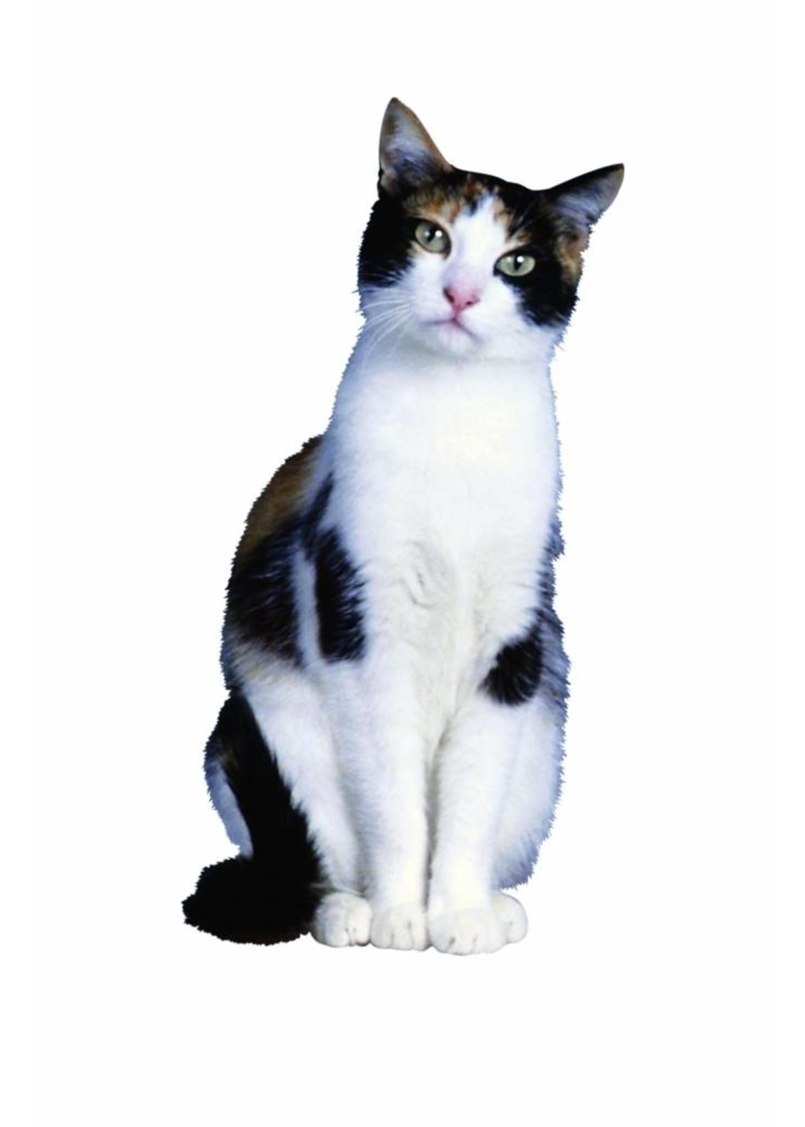 BSi Hot Exit 2 Liter katten- & hondenafweermiddel