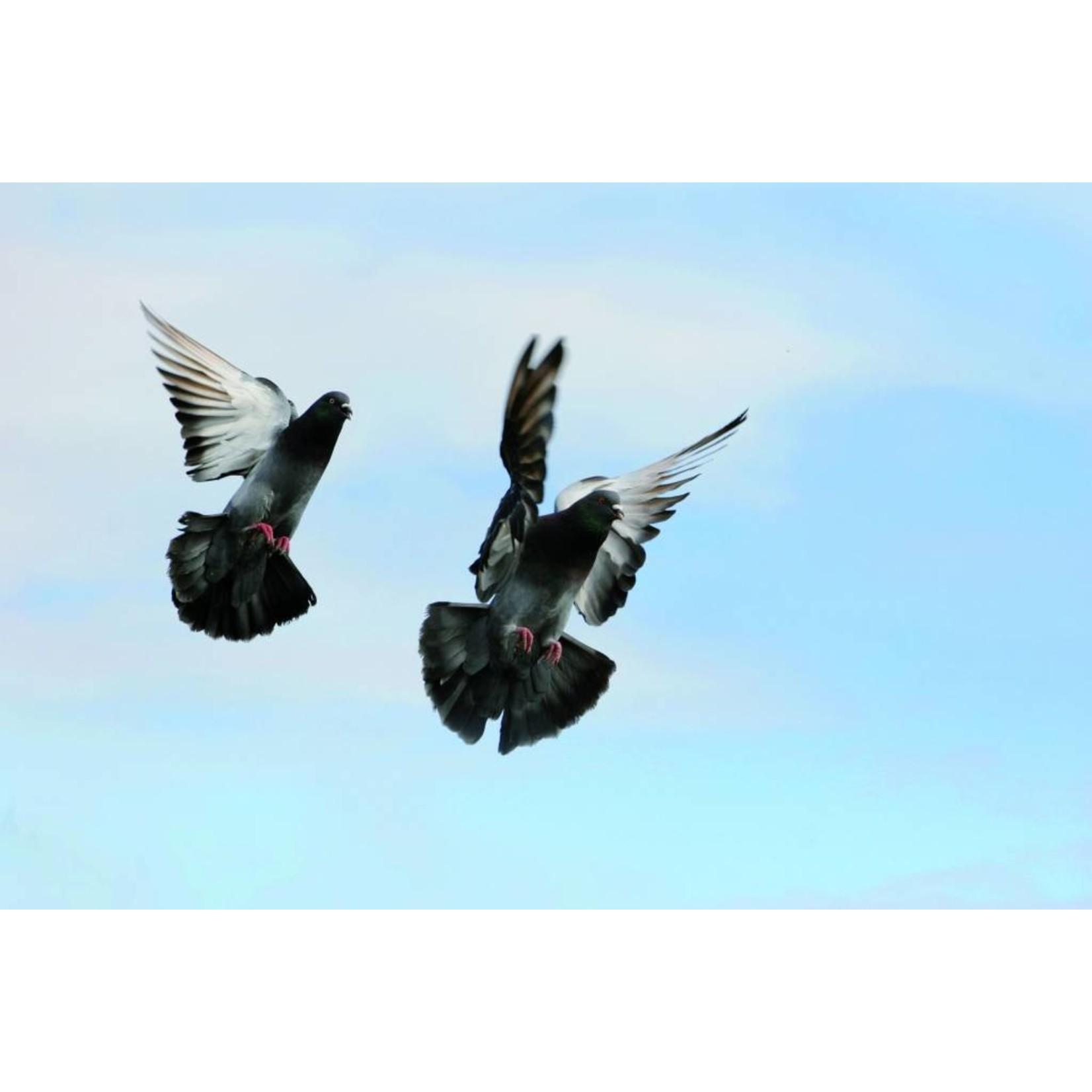 BSi Flash off Vogelafweer en andere wilde dieren 2 rollen