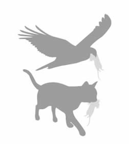 Goodnature® Automatische Ratten- & Muizenval set A24
