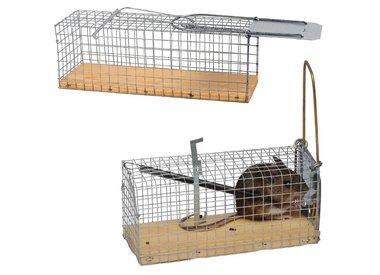 Muizen- en Rattenvallen
