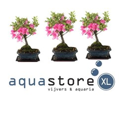 AquastoreXL Bonsai