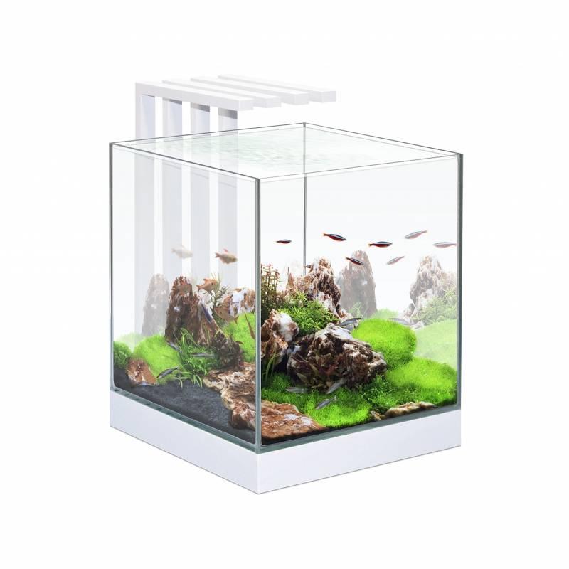 Ciano aquaria
