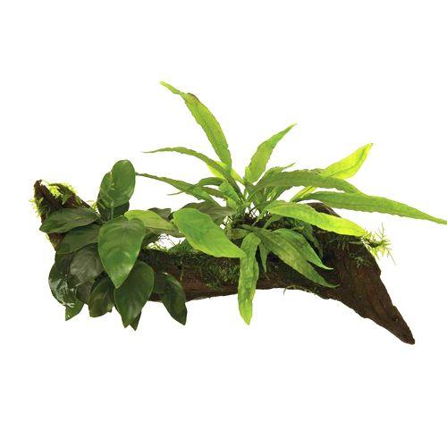 Planten op Decoratie