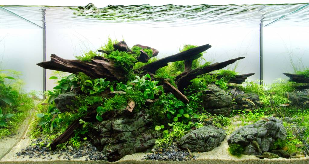 Alles over aquascaping