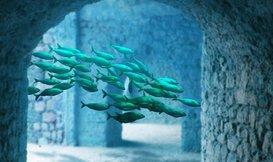 De leukste decoratie voor in uw aquarium