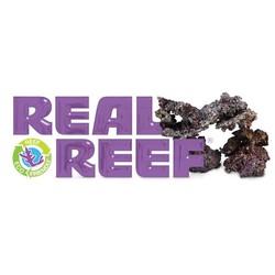 Reel Reef Rock