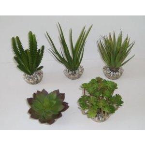 AquastoreXL Succulente 6-19cm