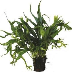 Planten Extra Groot